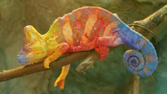chameleon-FI