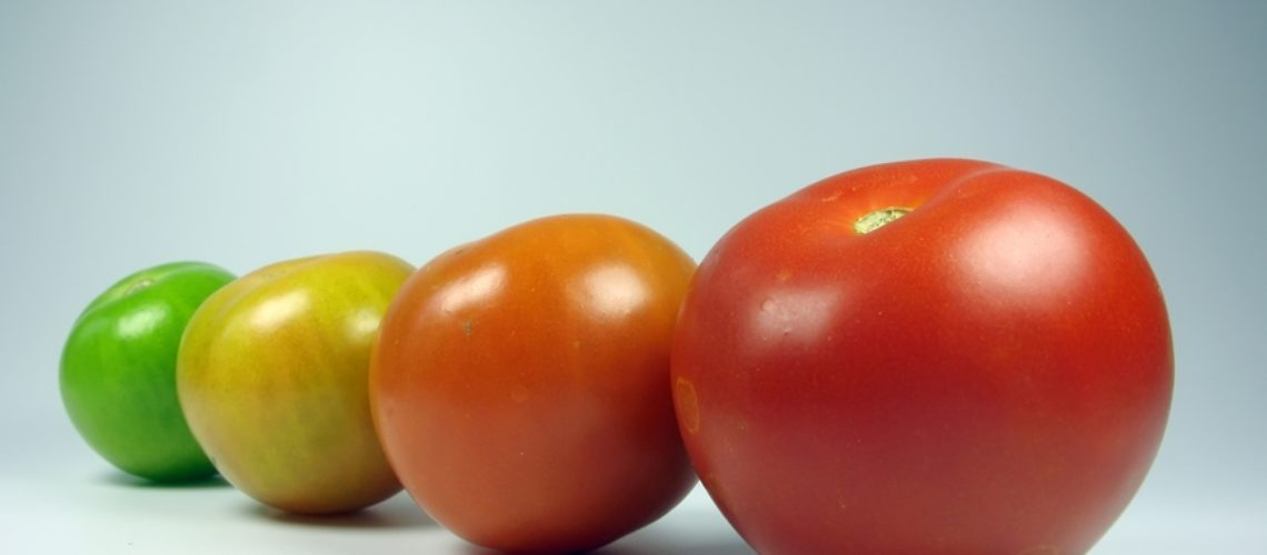 evolving tomatoes